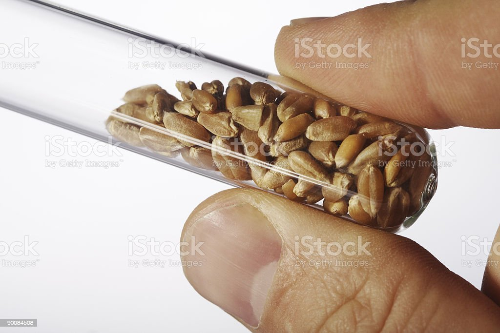 sampe wheat in test tube royalty-free stock photo