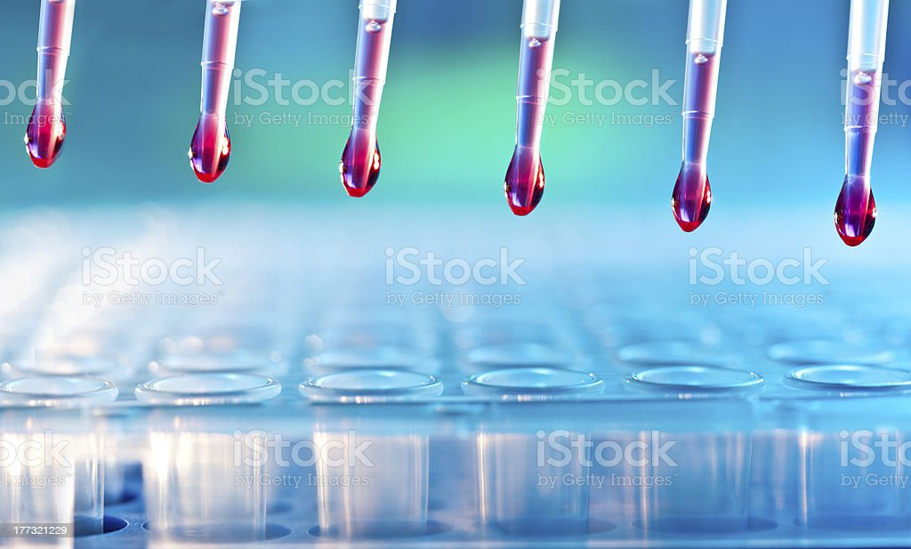 Sample loading with multichannel pipette stock photo