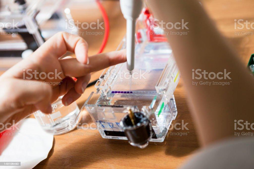 Sample preparation for DNA electrophoresis stock photo