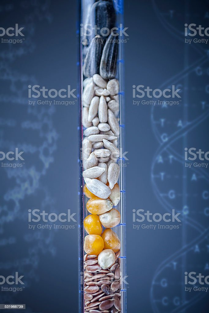 Sample Seeds in Test Tube stock photo