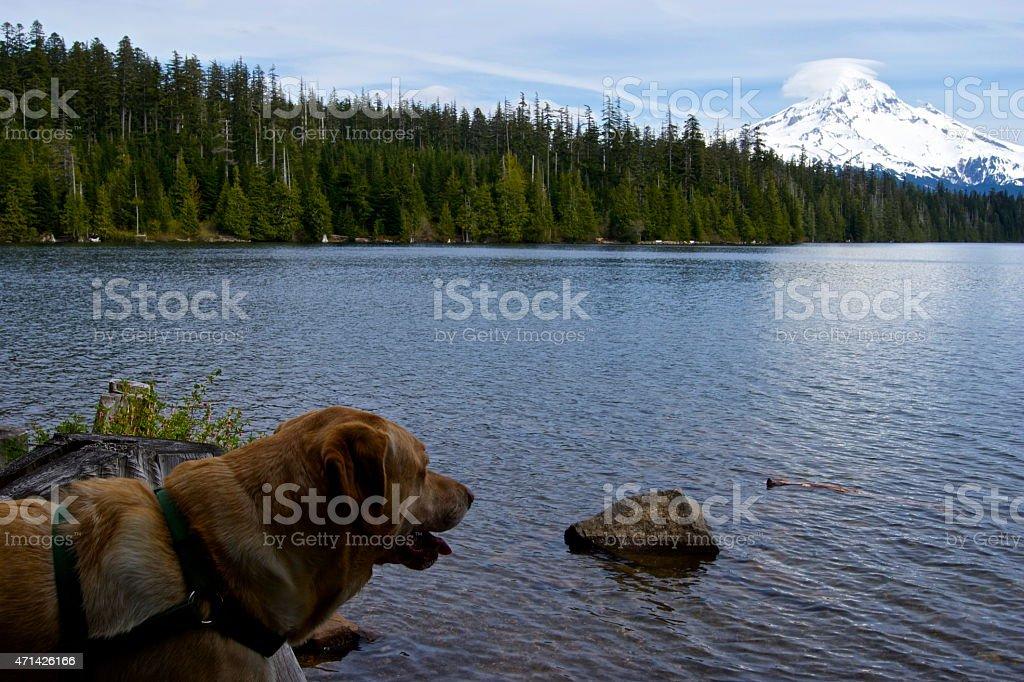 Samson Near Mt. Hood stock photo