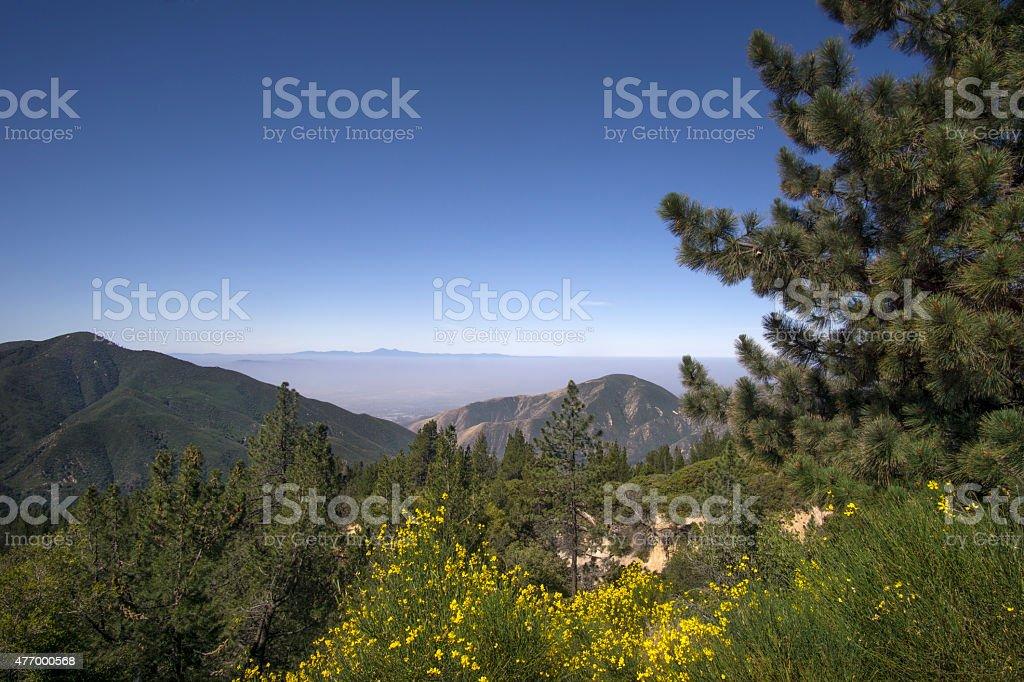 San Bernardino National Forest, Ca,USA near Big Bear Lake stock photo