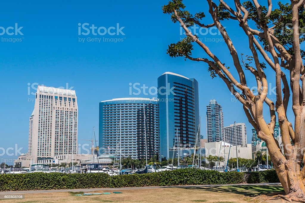 San Diego Embarcadero Skyline with Coral Trees stock photo