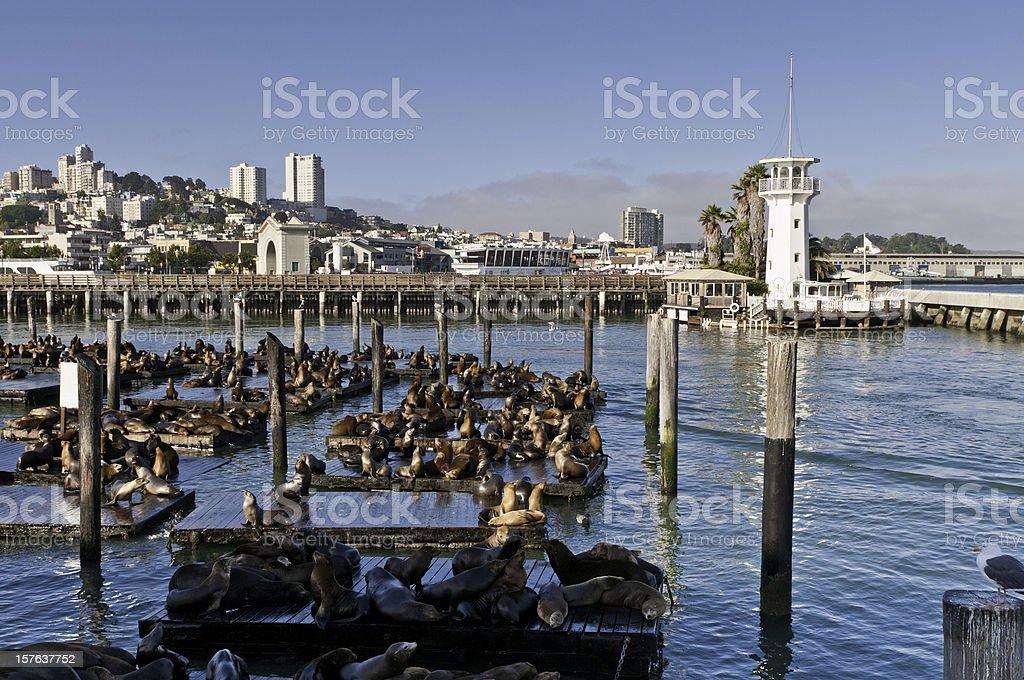 San Francisco Fisherman's Wharf sea lion colony harbor lighthouse California stock photo