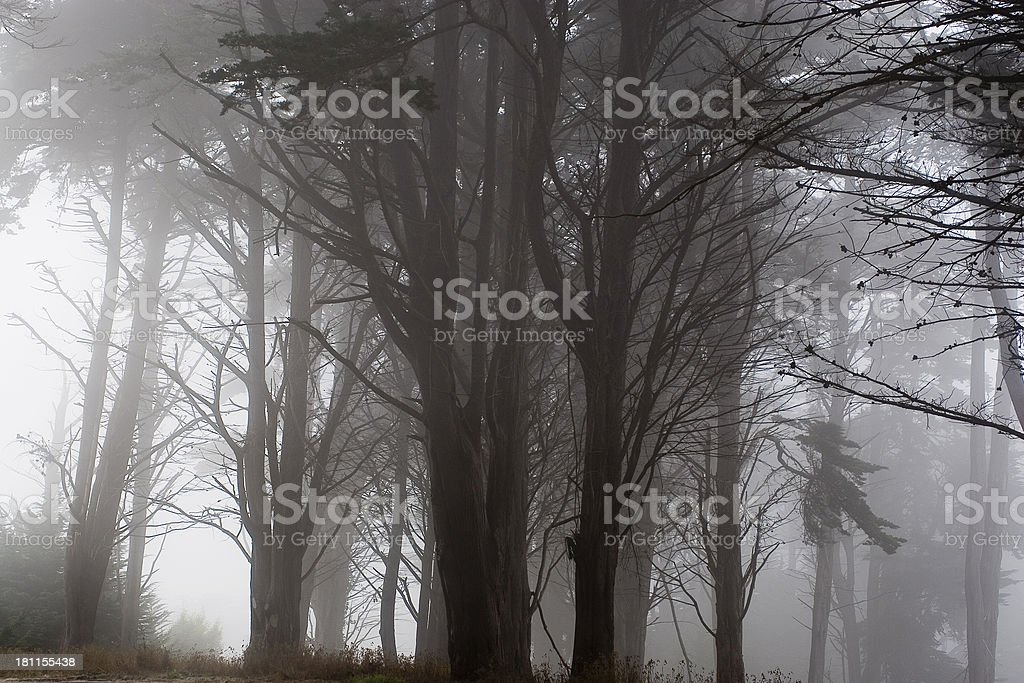 San Francisco: Fog in the Trees royalty-free stock photo