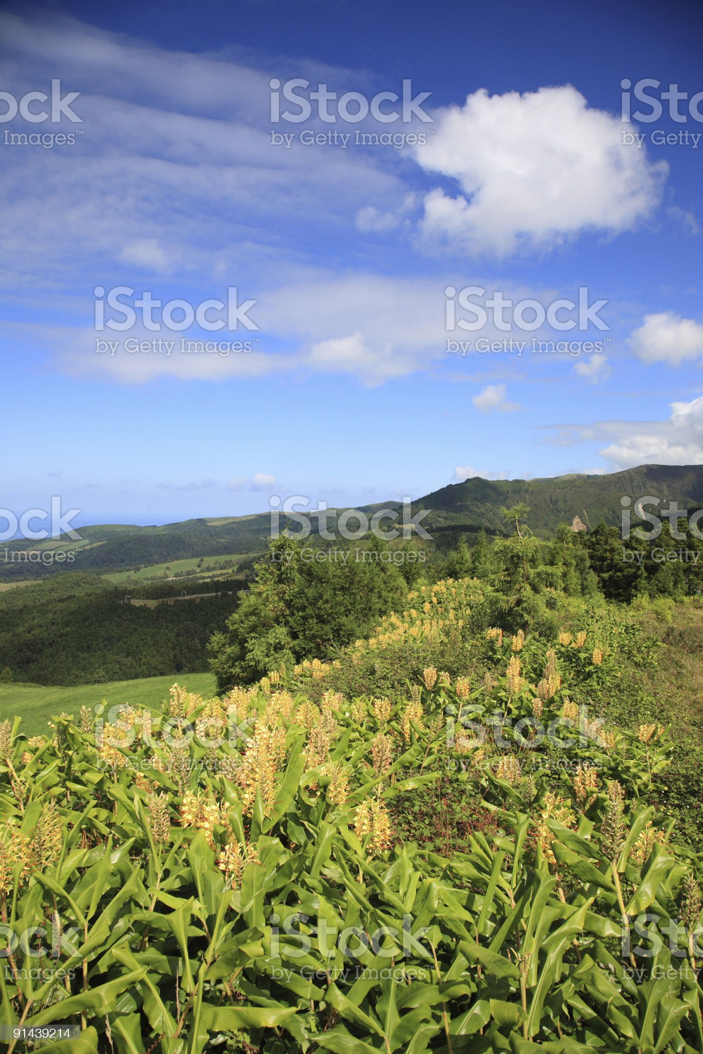 San Miguel Azores royalty-free stock photo