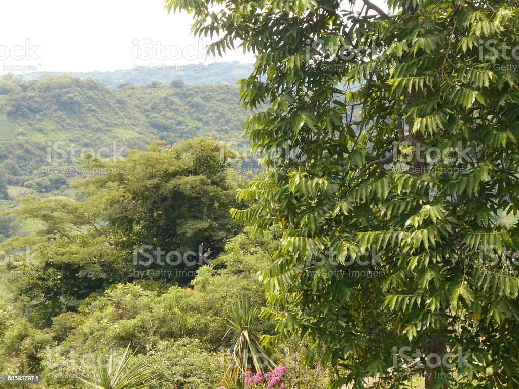 San Salvador Mountain and trees stock photo