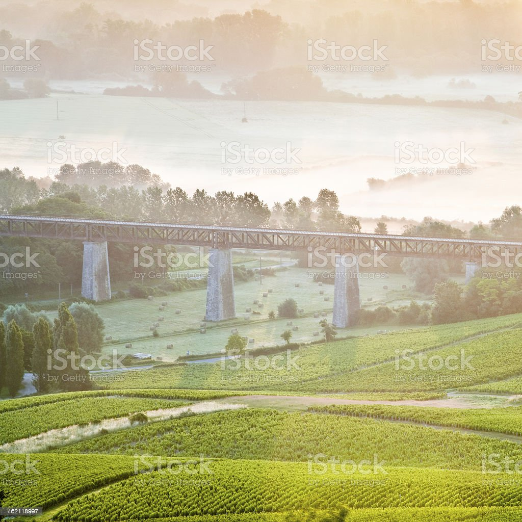 Sancerre vignes stock photo