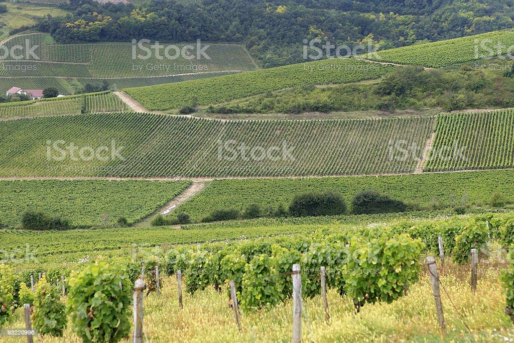 Sancerre vineyards in summer royalty-free stock photo