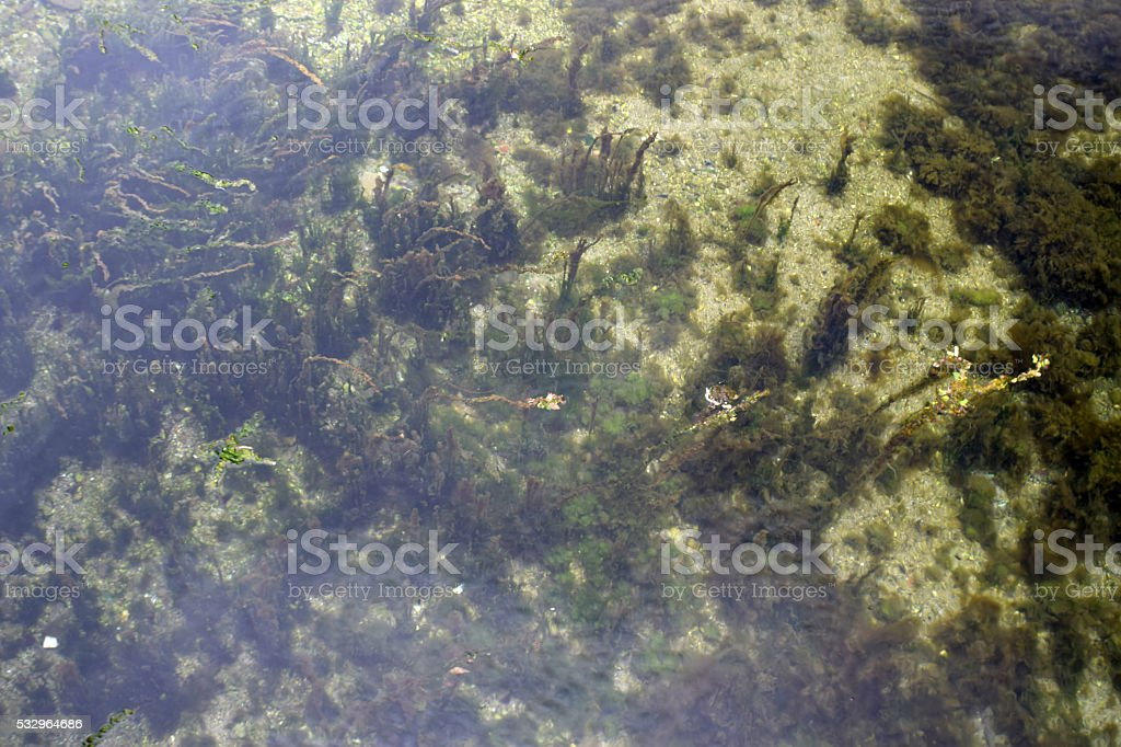 Sand and algae on the seabed stock photo
