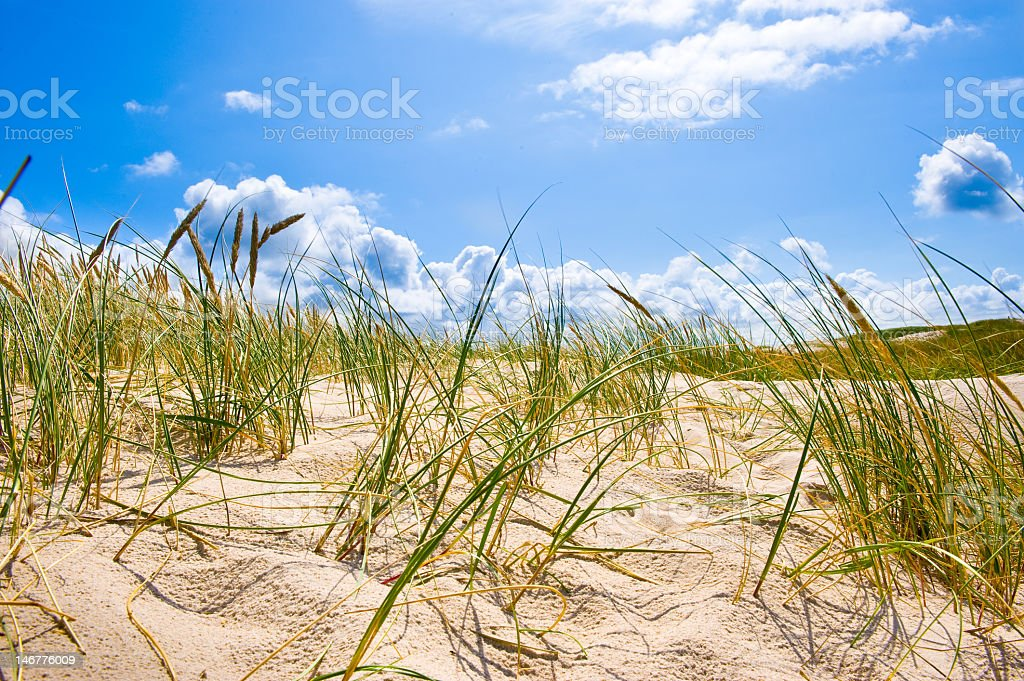Sand and grass on the coastline stock photo