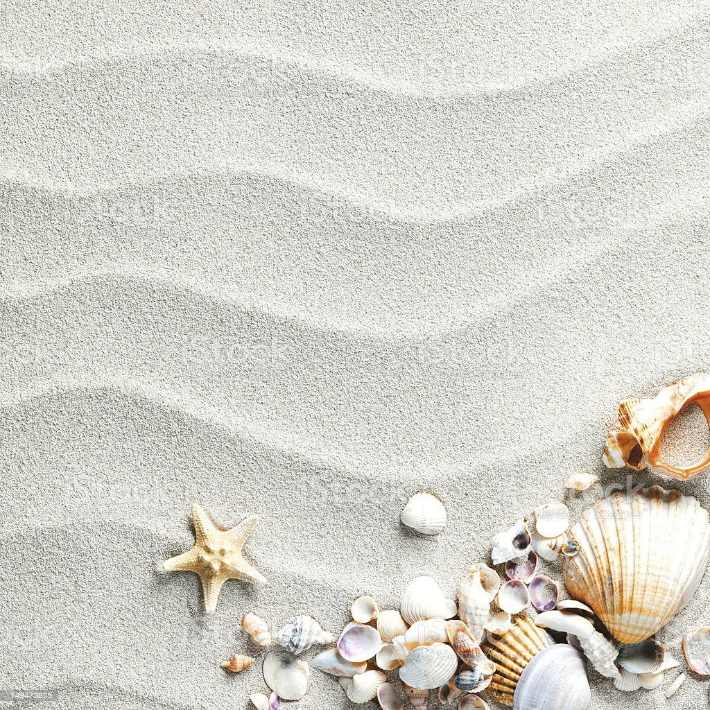 sand background with shells and starfish stock photo