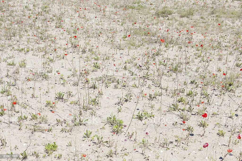 sand covered with grass and flowers stock photo