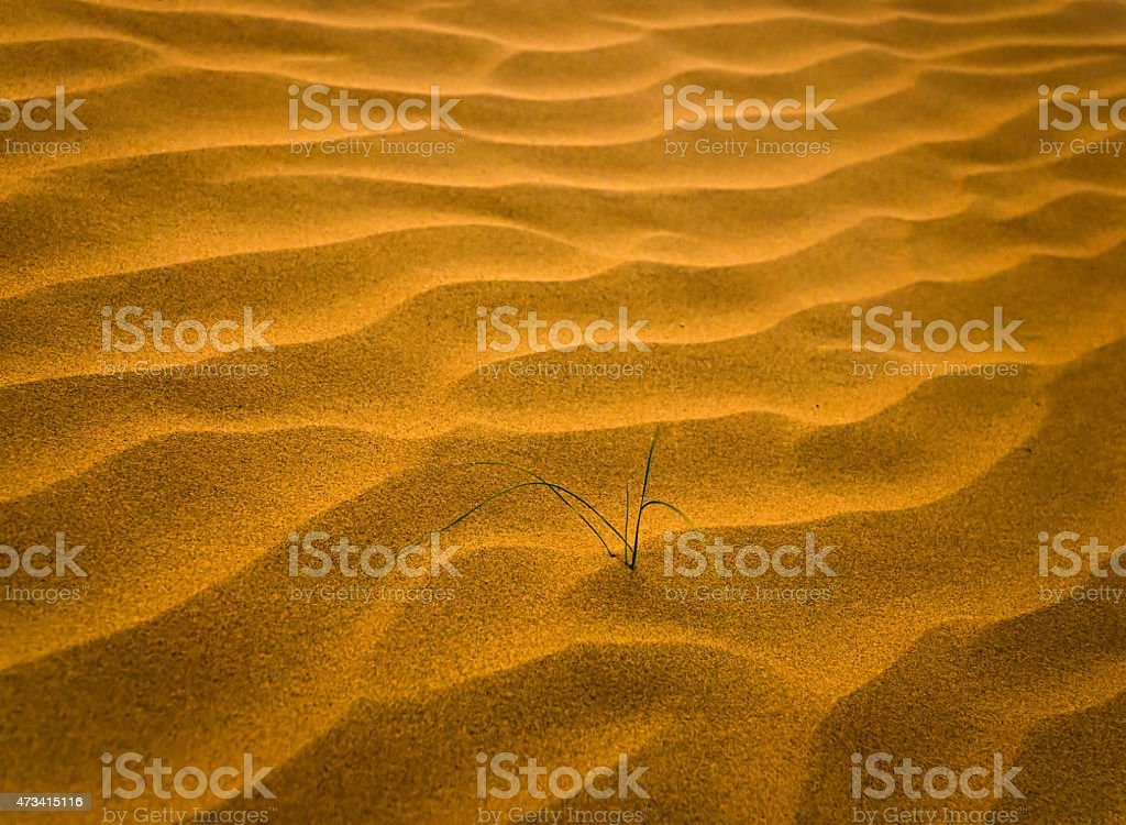 Désert de sable avec herbe (Flouté) photo libre de droits