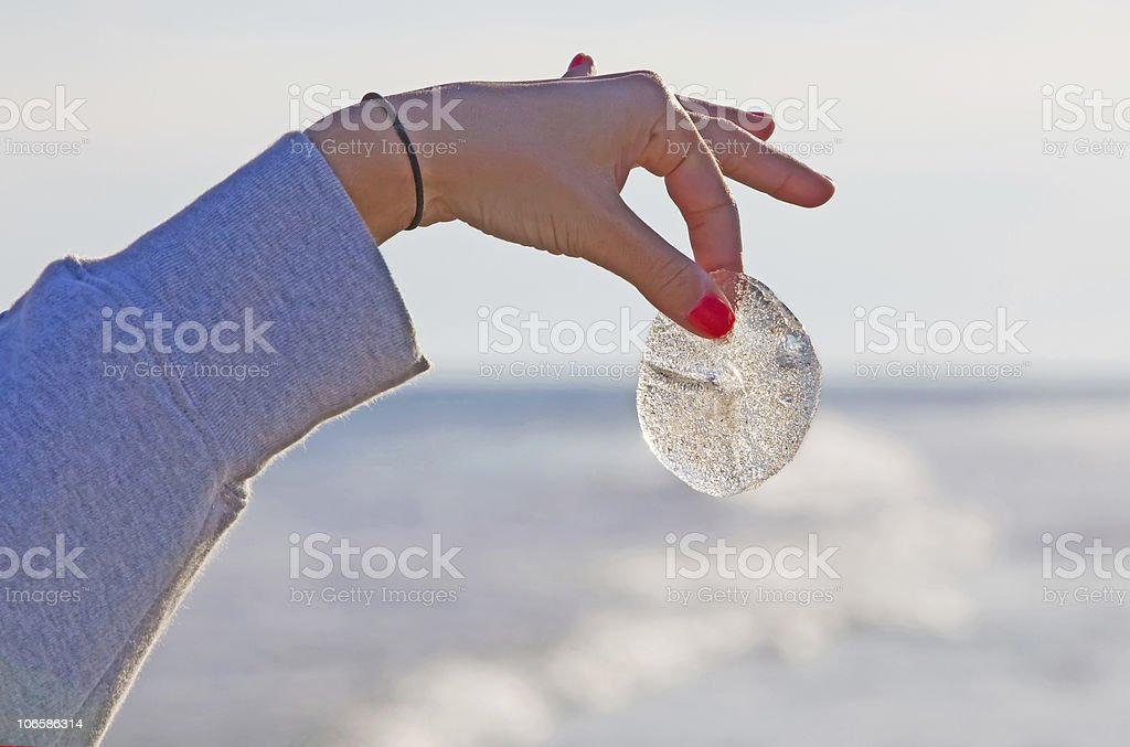 sand dollar royalty-free stock photo