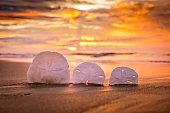 Sand dollars and sunrise