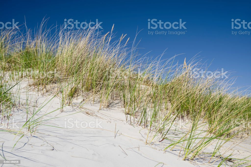 Sand dune and beachgrass under deep blue sky stock photo