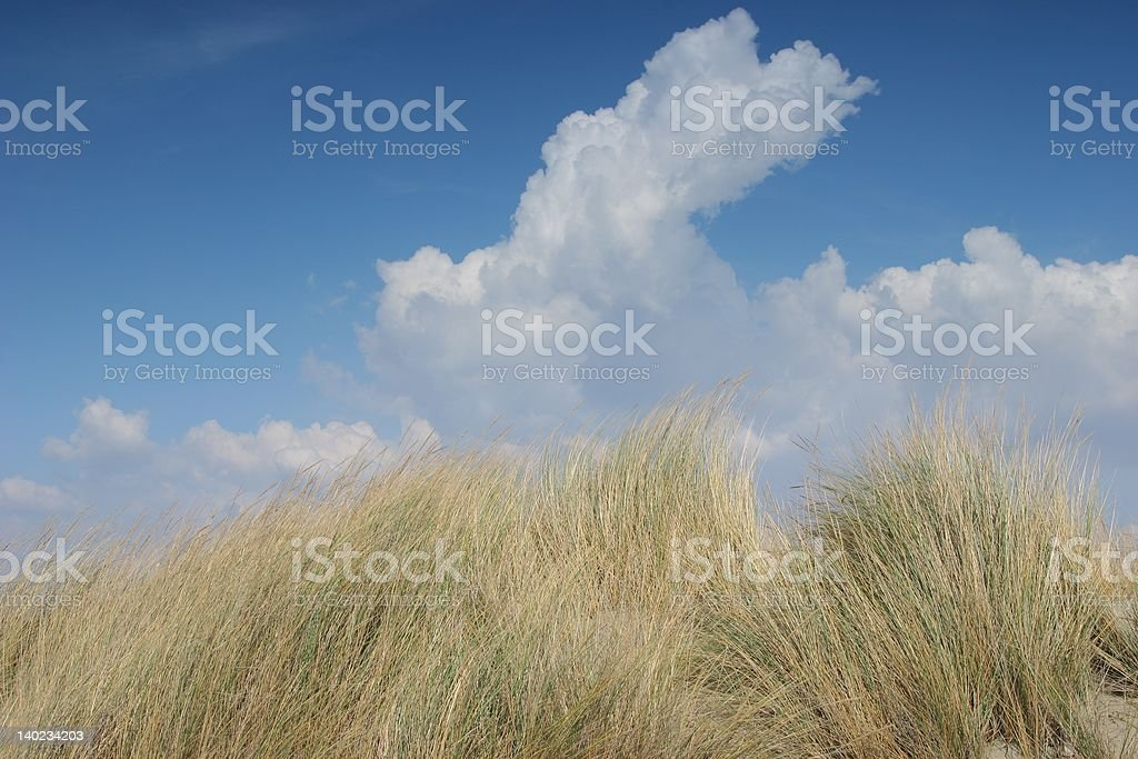 Sand dune and summer bush royalty-free stock photo