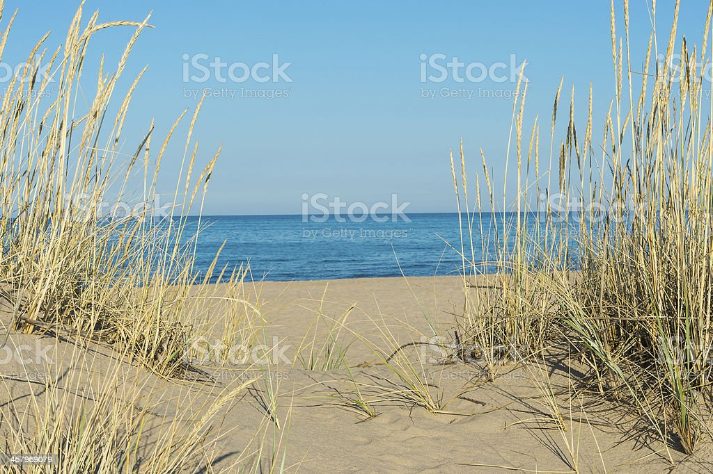 Sand Dune Beach With Tall Grass And Water stock photo