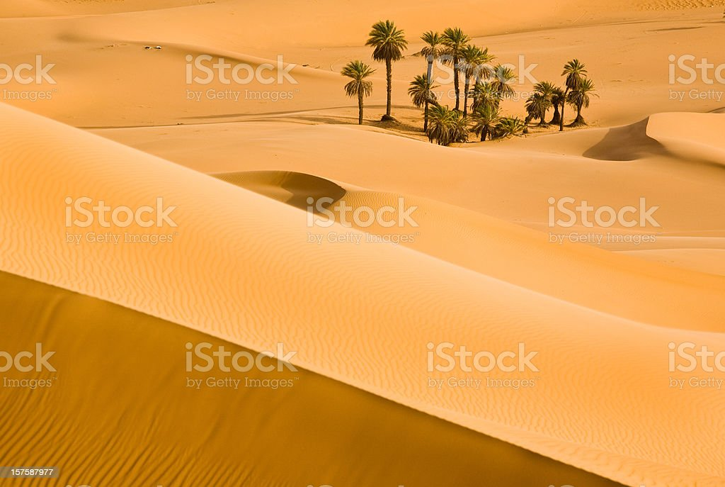 Sand dune between light and shadow in the Sahara stock photo