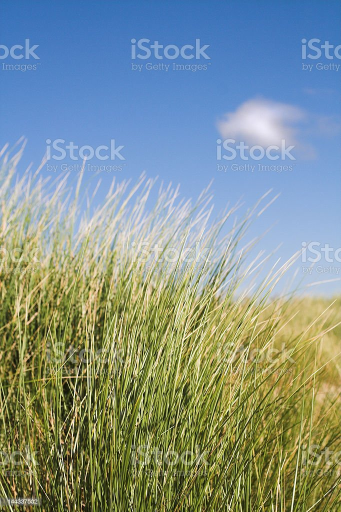 Sand Dune Grass royalty-free stock photo