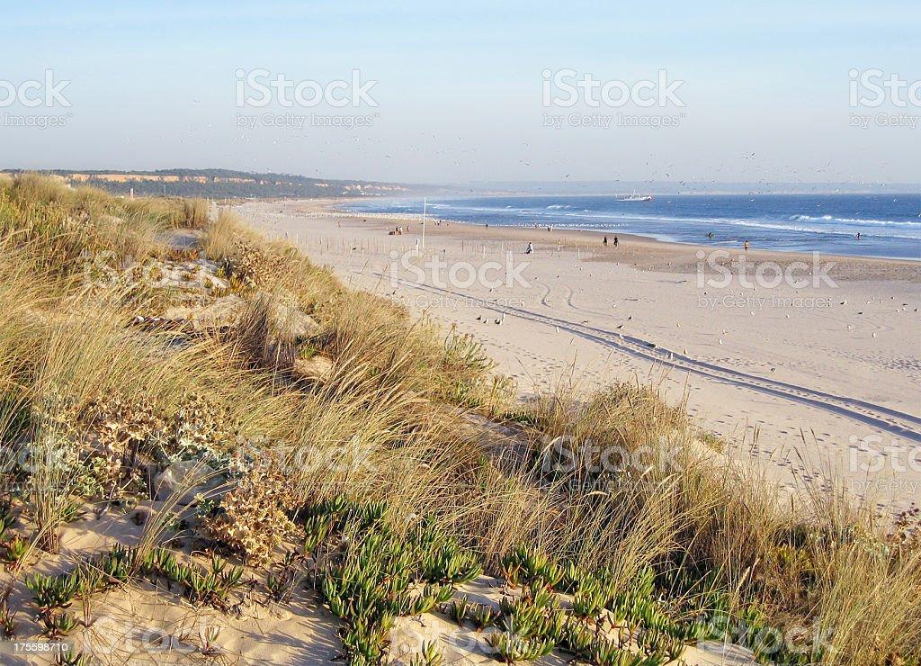 Sand dune on Atlanic beach at Costa da Caparica (Portugal) royalty-free stock photo