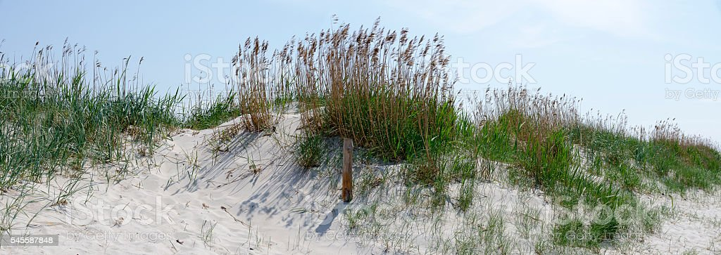 sand dune partly overgrown by grass stock photo