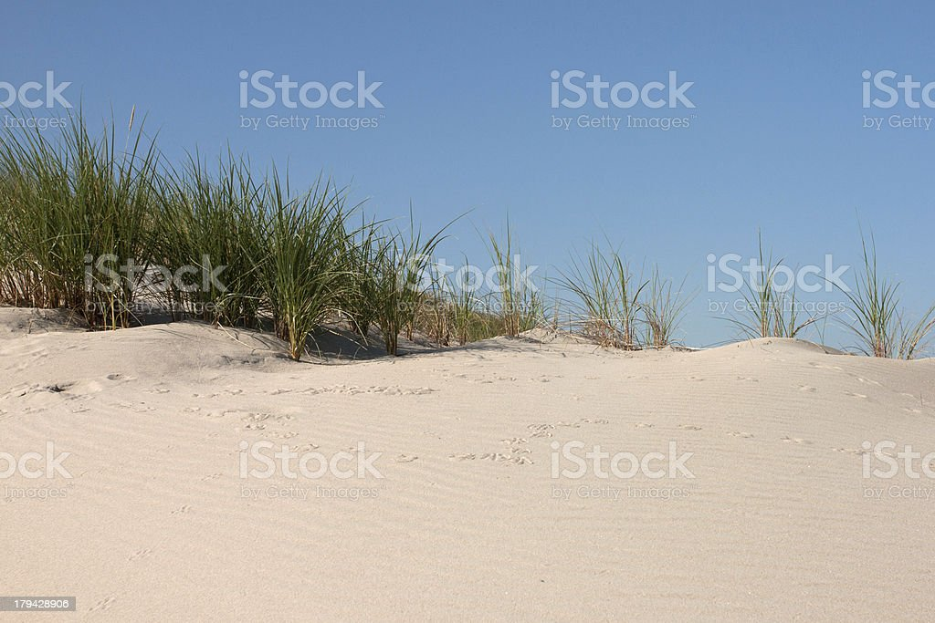 Sand dune Lizenzfreies stock-foto