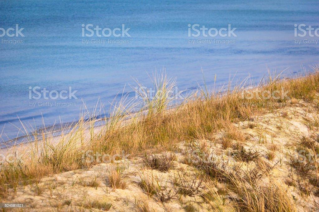 Sand Dune with European Beachgrass stock photo