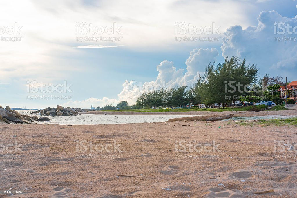 sand dune with pine forest over sea in the summer stock photo