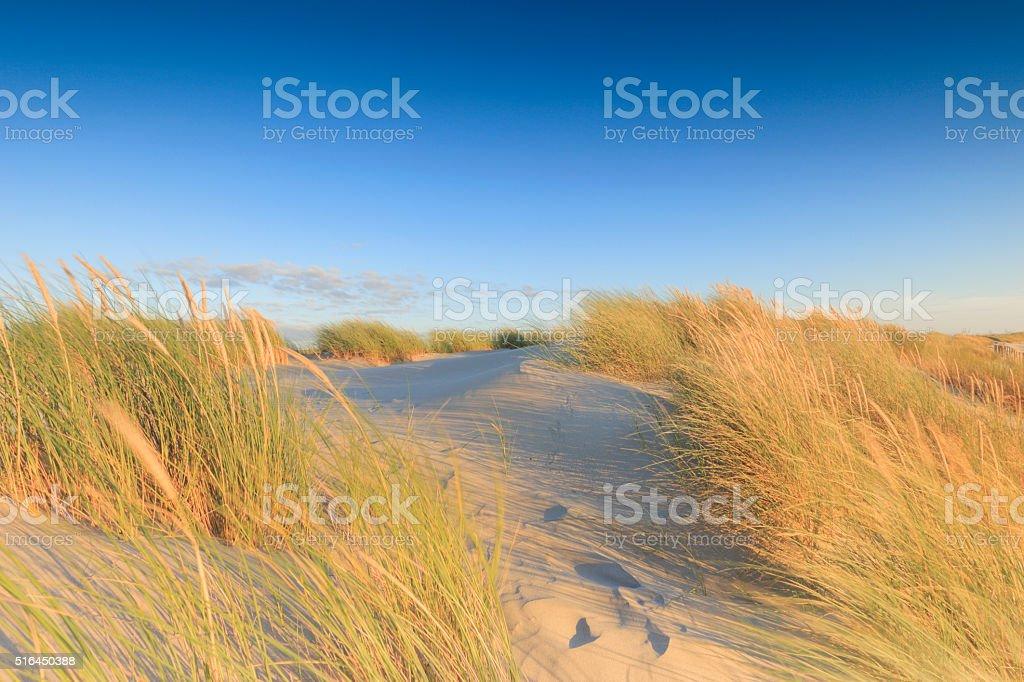 sand dunes along the Dutch coast stock photo