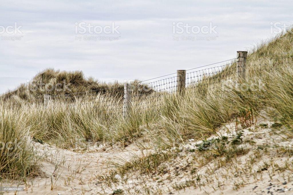sand dunes and beach stock photo