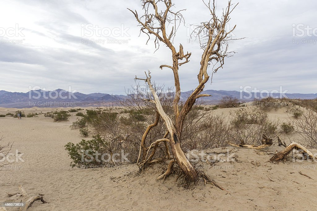 Sand Dunes and Mesquite, Death Valley royalty-free stock photo