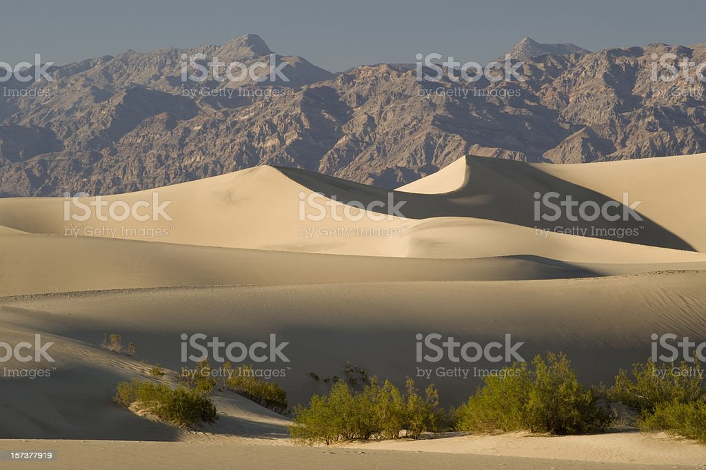 Sand dunes and Mesquite in Death Valley stock photo