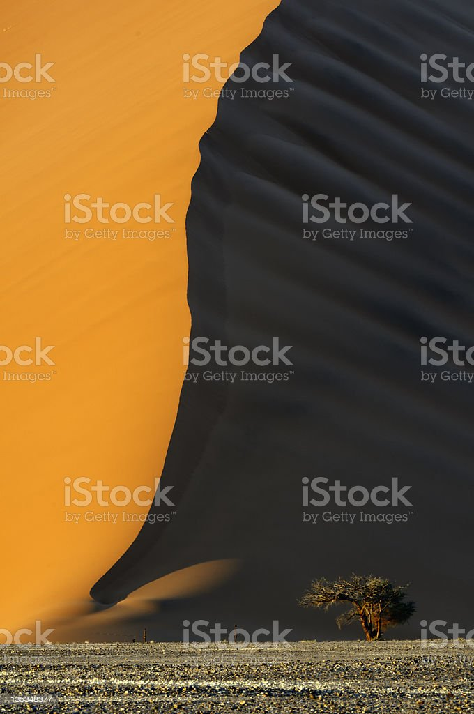 Sand Dunes and Solitary Tree, Namibia stock photo