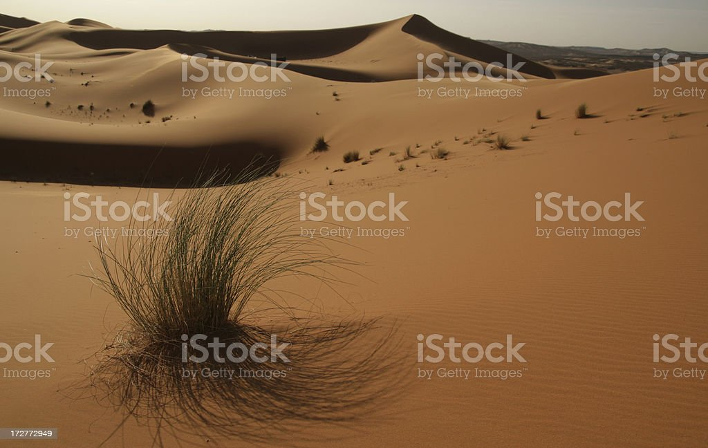 Sand dunes and vegetation. stock photo