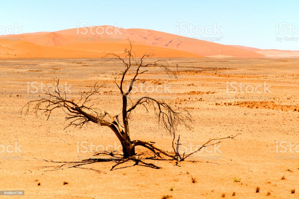 Sand dunes and withered tree, Namibia stock photo