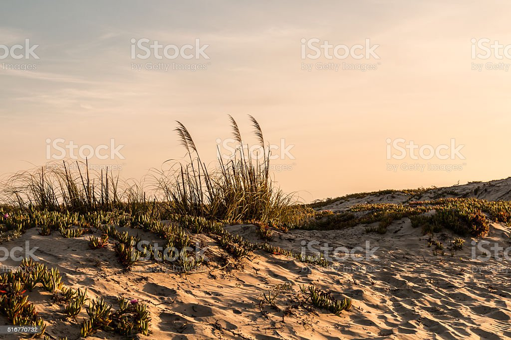 Sand Dunes at Coronado Beach at Dusk stock photo
