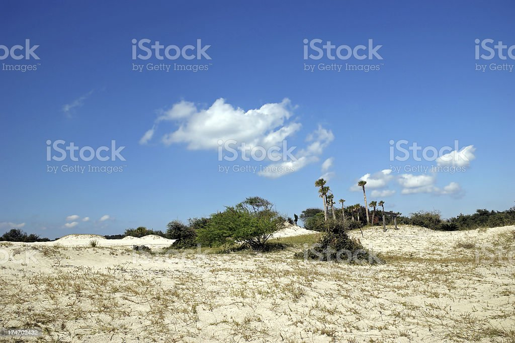 Sand Dunes at Cumberland Island Georgia stock photo