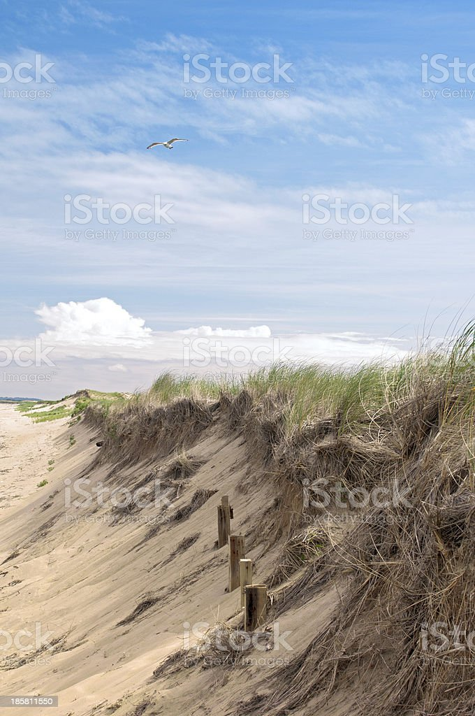 Sand dunes beach and grass royalty-free stock photo