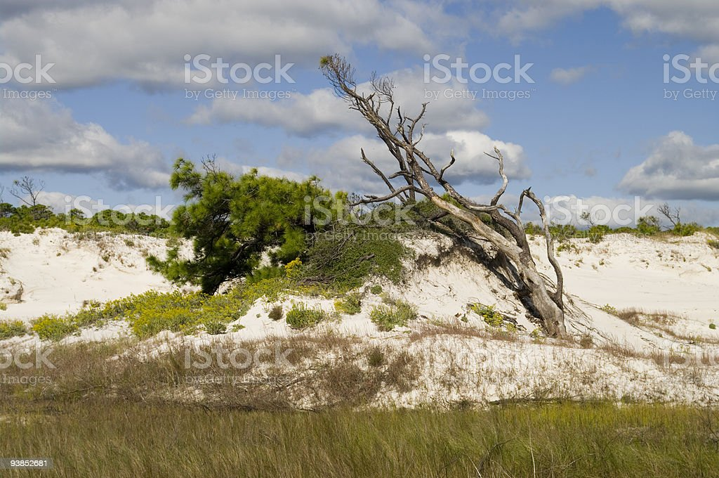 Sand dunes covered with vegetation #3 stock photo