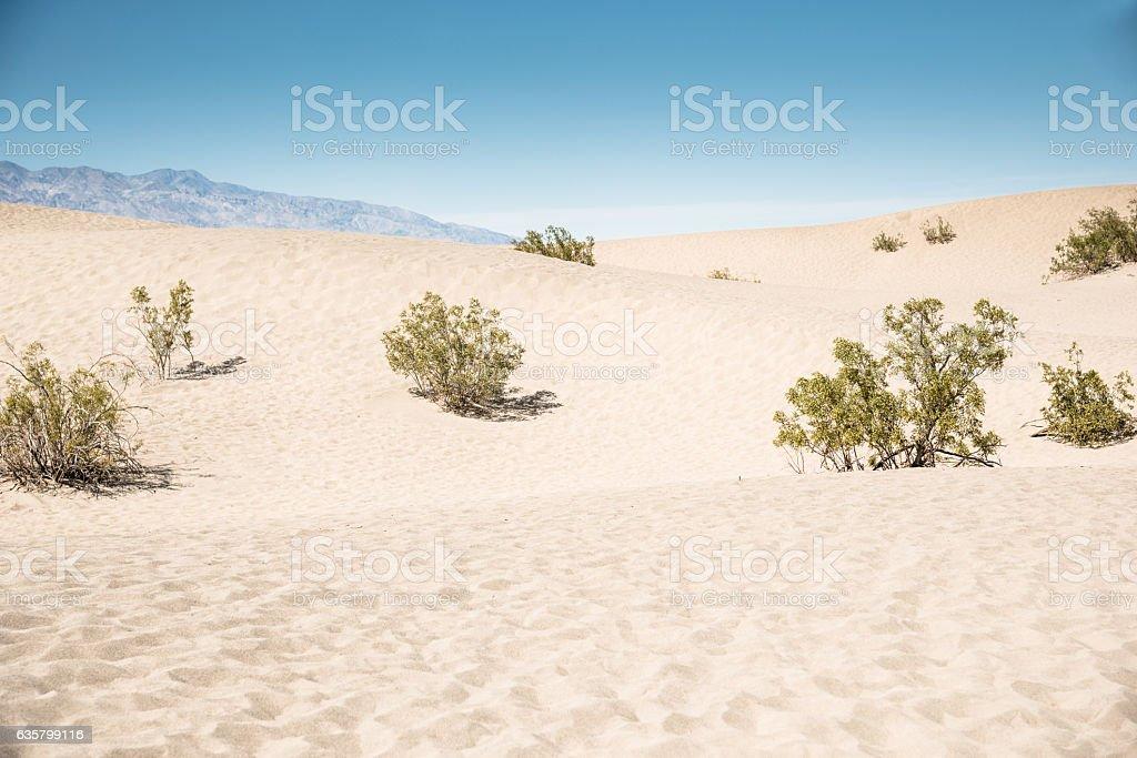 sand dunes desert in the death valley stock photo