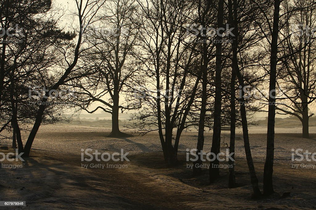 Sand dunes in dawn stock photo