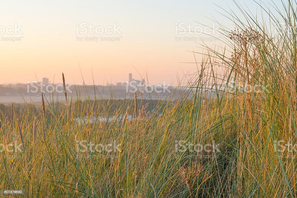 Sand dunes in the light of sunrise in summer stock photo