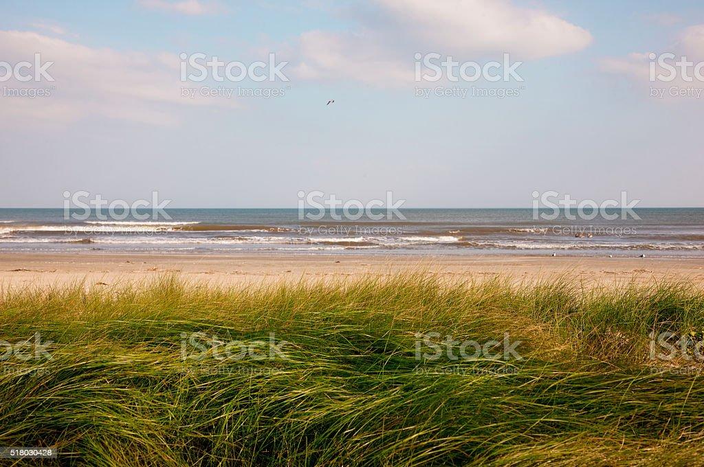 Sand dunes in West Galveston, Texas stock photo