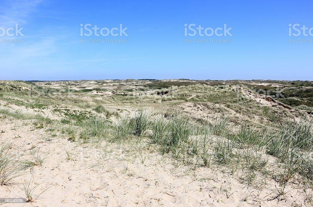 Sand dunes of Egmond aan Zee. The Netherlands. stock photo