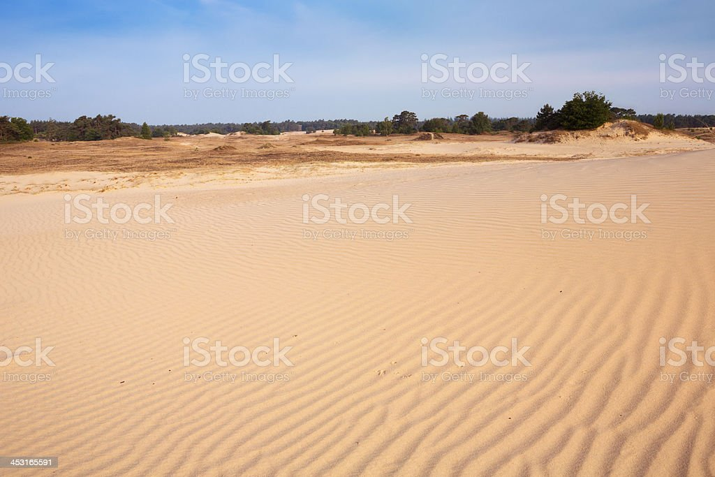 Sand dunes on a sunny day in Kootwijkerzand, The Netherlands royalty-free stock photo