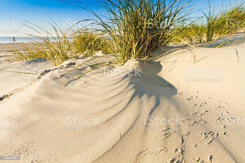 Sand Dunes on Pawleys Island South Carolina royalty-free stock photo