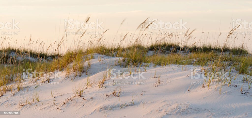 Sand Dunes with Blowing Grass on a Windy Morning stock photo