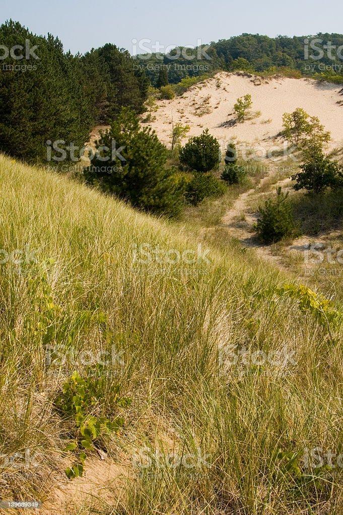 Sand Dunes with Vegetation stock photo